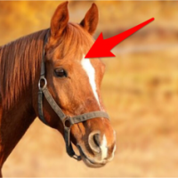 horse with acupressure point